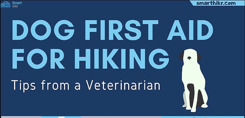 Dog first aid for hiking - kit items